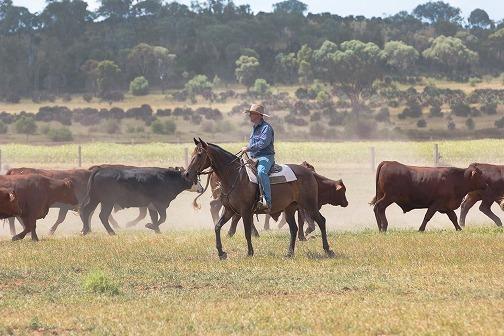 Clayton on Horse (1 of 1)