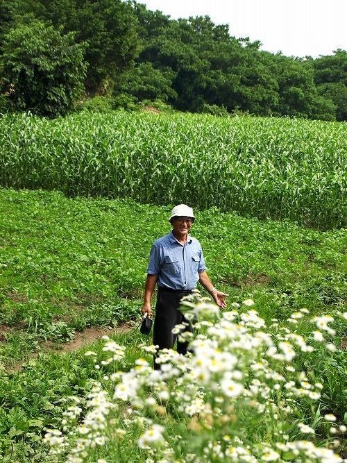 雑穀畑の緑