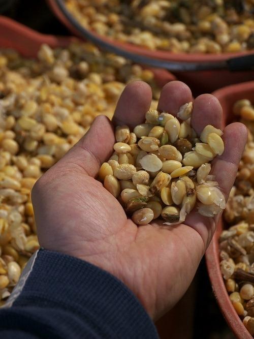 柿木農場では国産飼料100%!くず大豆を茹でたものを僕も食べてみたが、くずどころか立派に美味しい大豆だった!