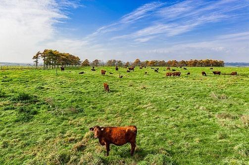 A2_D700433a北海道音別町の短角和牛たち