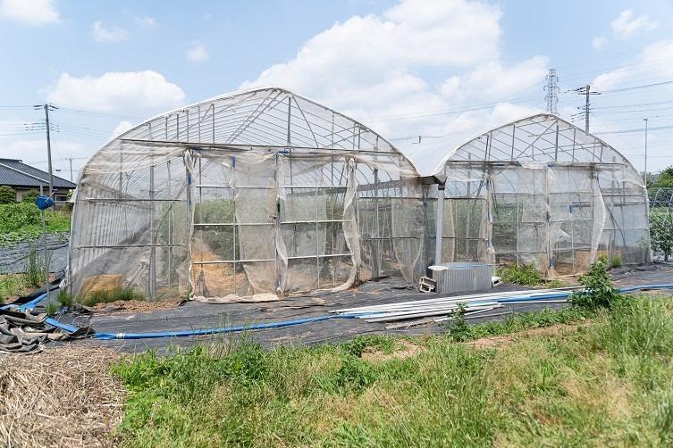 ハウス トマト栽培用