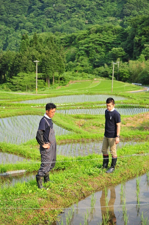 飯尾醸造の田圃 (2)