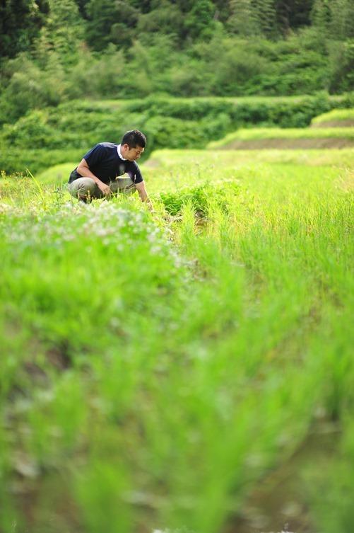 飯尾醸造の田圃